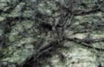 Helena Tulve: Arboles Lloran Por Lluvia